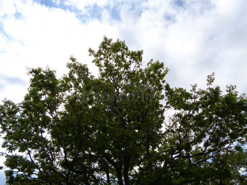 森林场面-树枝bacground天空 免版税库存图片