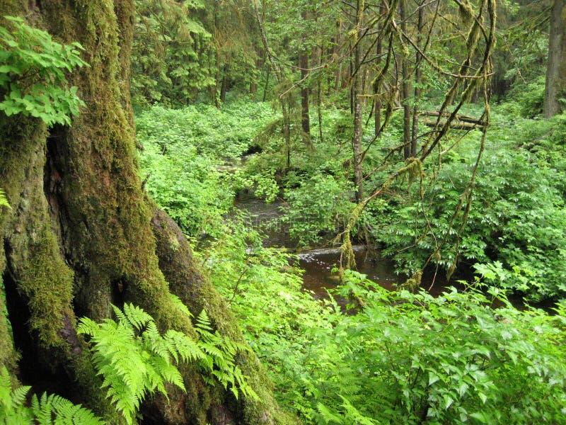 森林场面 免版税库存照片