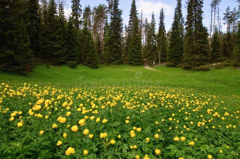森林域 免版税库存照片