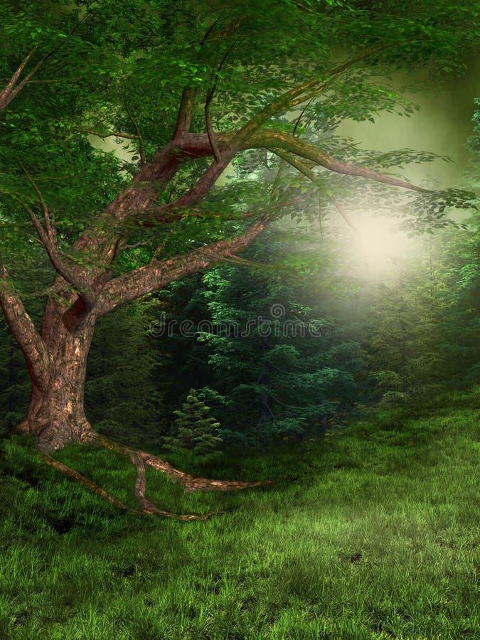 森林夏天 向量例证