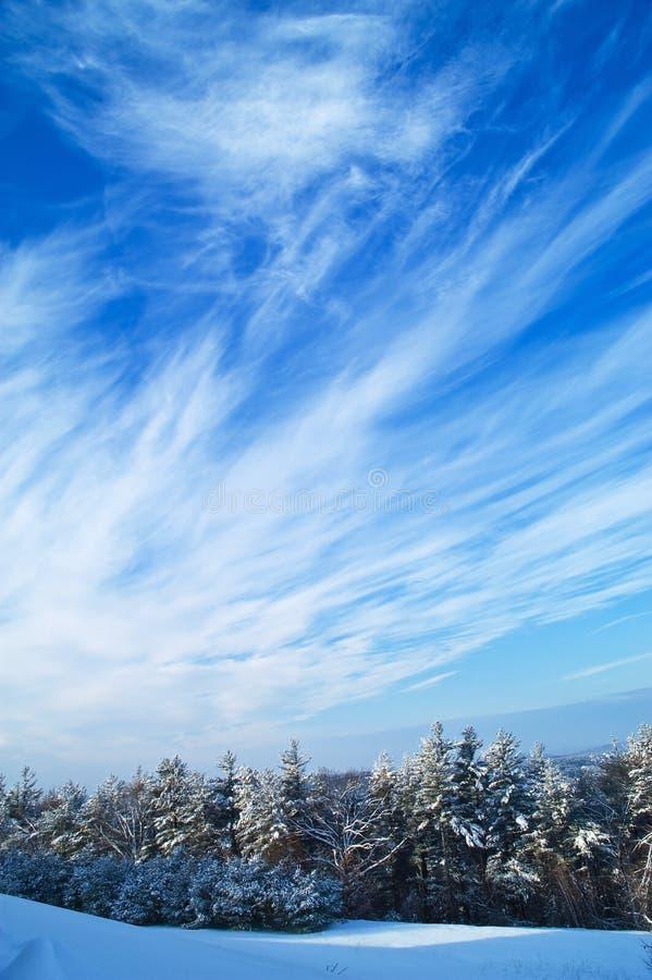 森林天空有风冬天 免版税库存图片