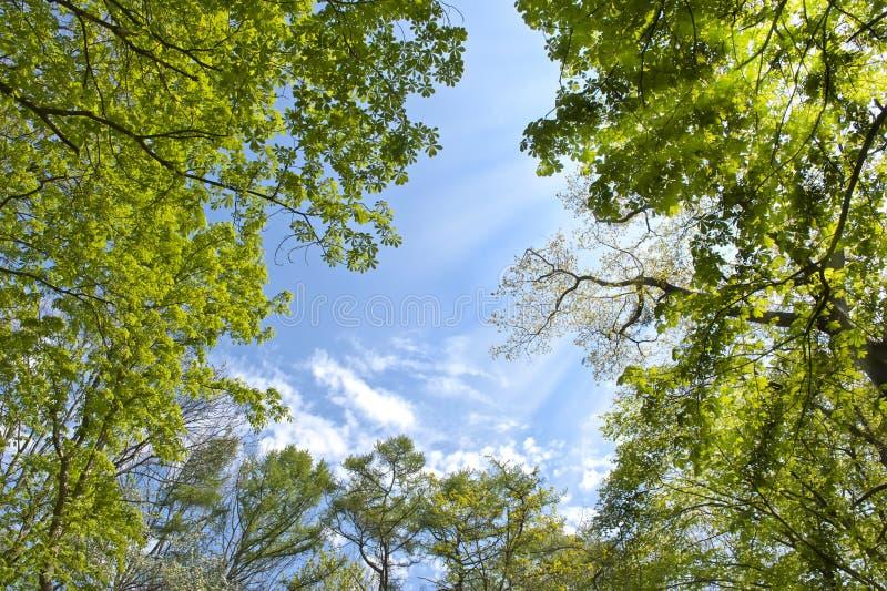 森林天空 免版税库存图片