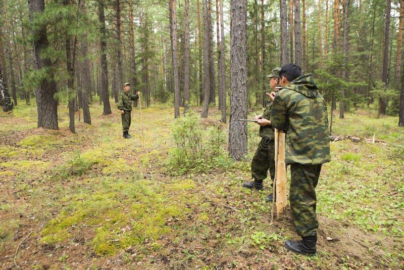 森林审查员工作在森林里 库存照片