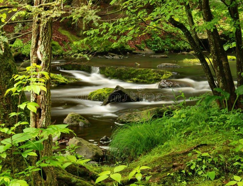 森林宾夕法尼亚流 图库摄影