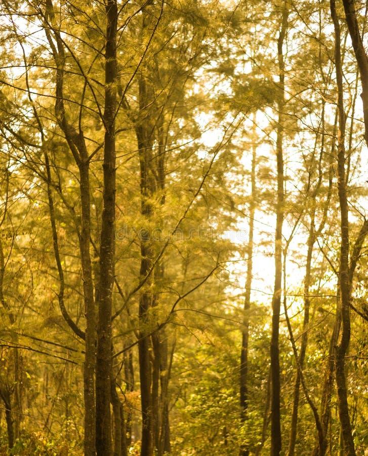 森林密林绿色树孟加拉国太阳土壤路土壤实体木材生叶公园ecopark 库存图片