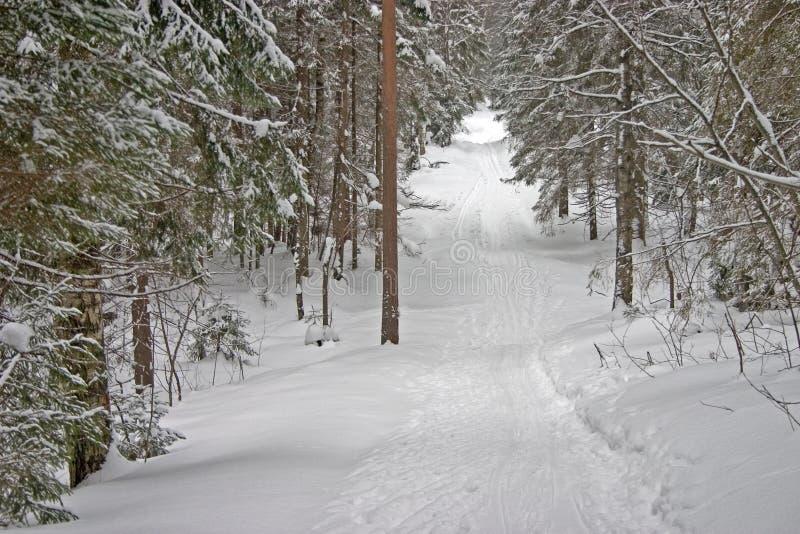 森林小山冬天 免版税库存照片