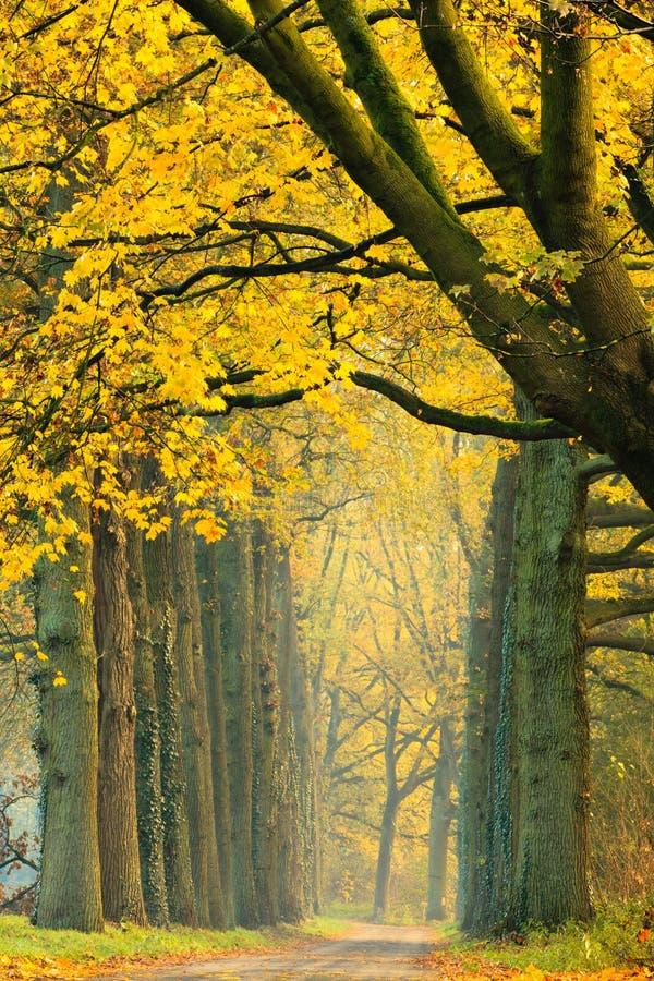 森林小径 库存图片