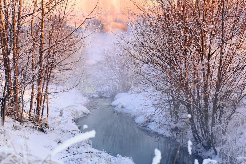 森林小河在冬天森林里 免版税库存照片