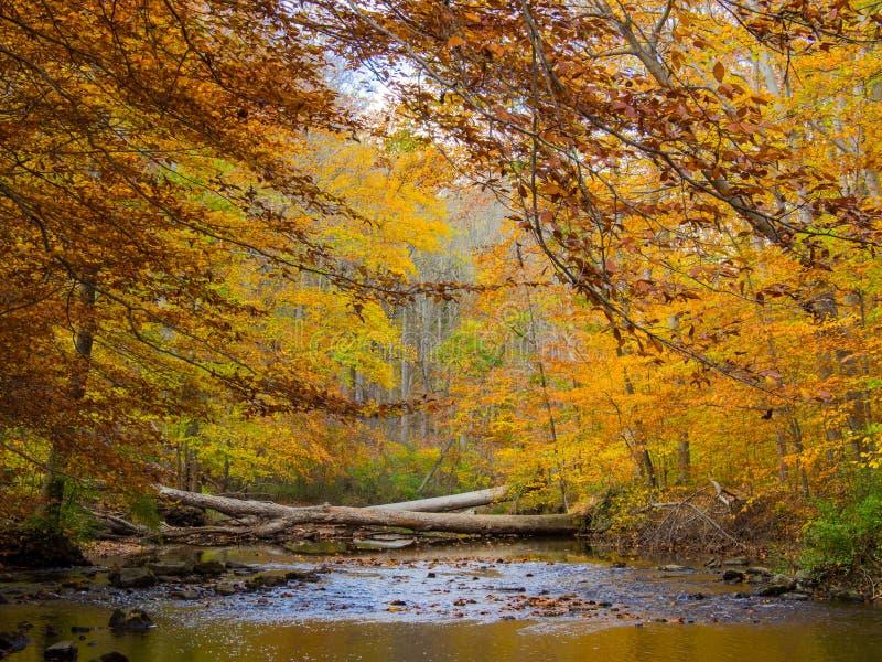 森林小河在秋天,宾夕法尼亚森林地, Ridley小河国家公园 免版税图库摄影
