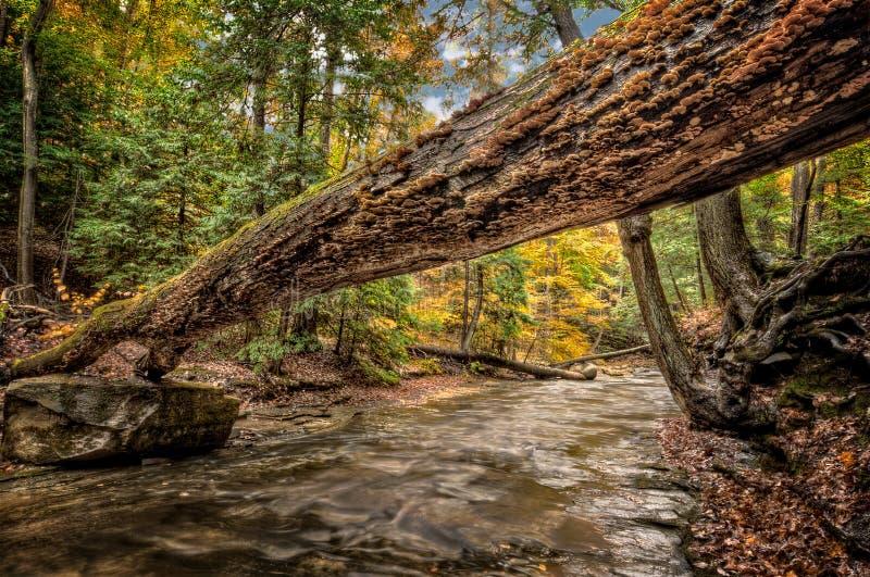 森林小河在秋天 免版税库存照片