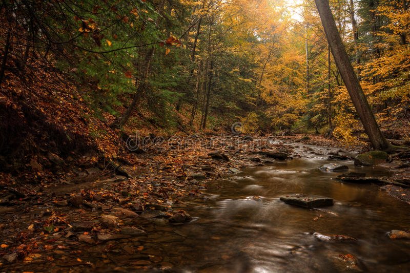 森林小河在秋天 免版税库存图片
