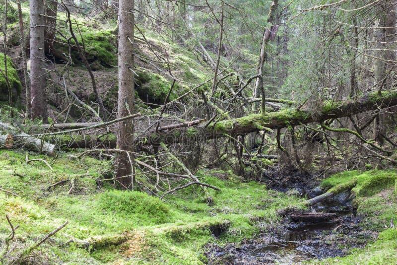 森林小河 库存照片