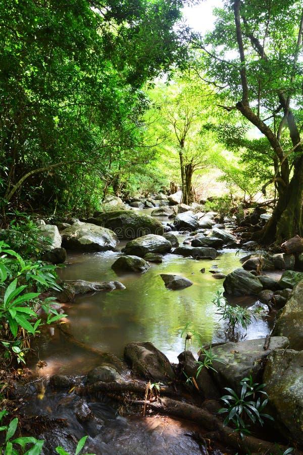 森林小河 免版税库存图片