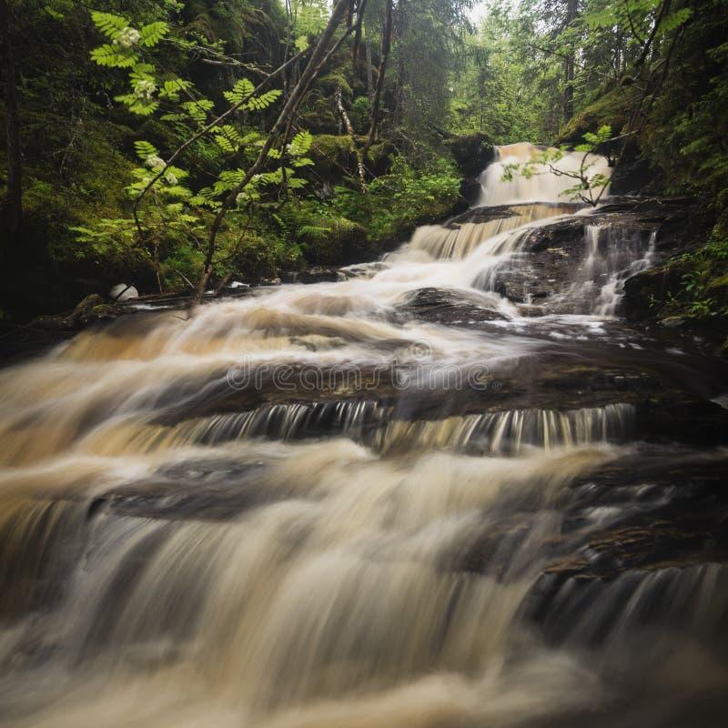 森林山小河在下雨天以后,夏天在挪威 免版税图库摄影