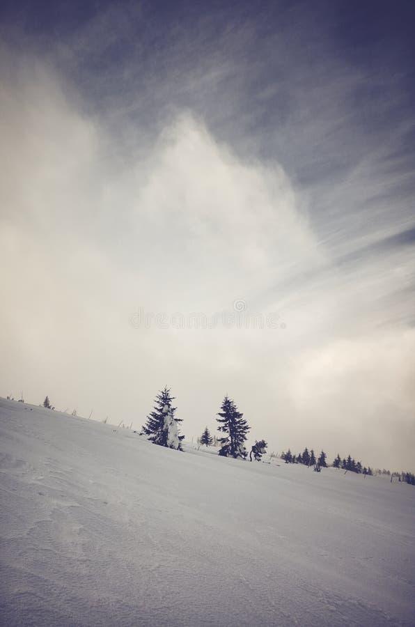 森林山阴云密布风景天空多雪的冬天 免版税库存图片