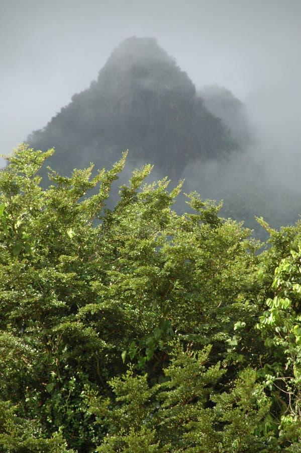 森林山雨 库存照片