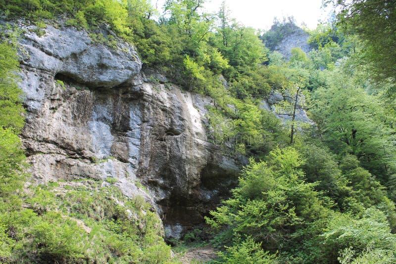 森林岩石 图库摄影