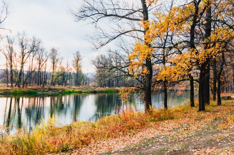 森林干草原区域洪泛区草甸  图库摄影