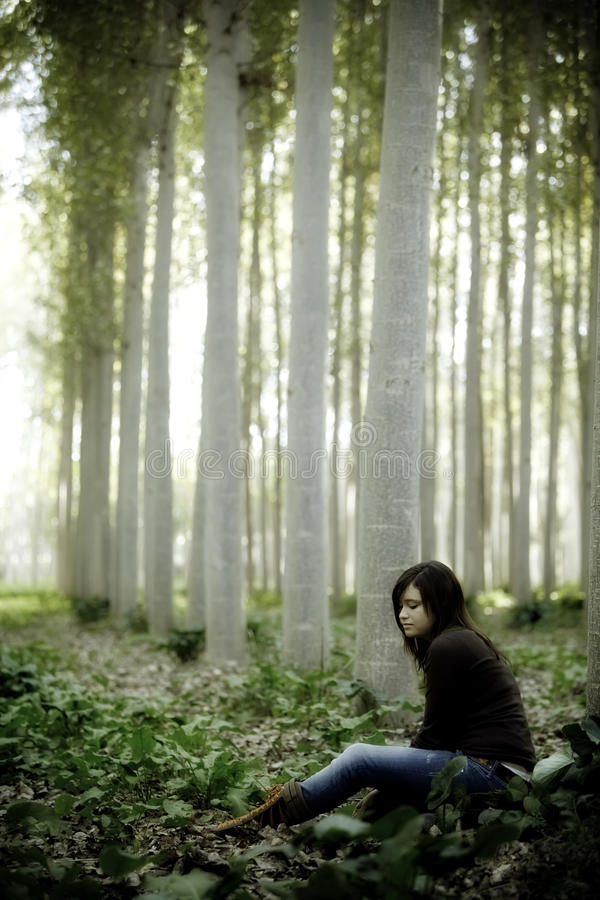 森林开会 库存图片