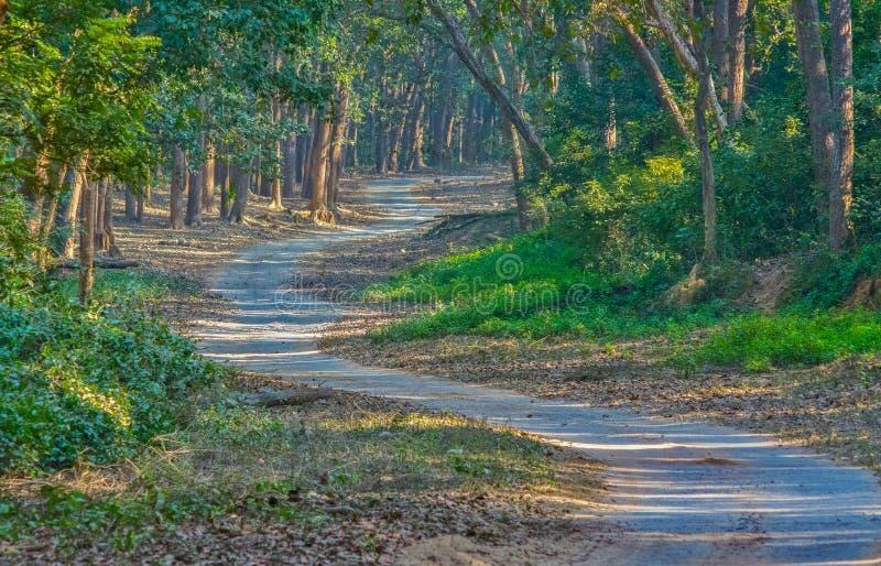 森林徒步旅行队足迹 免版税库存图片