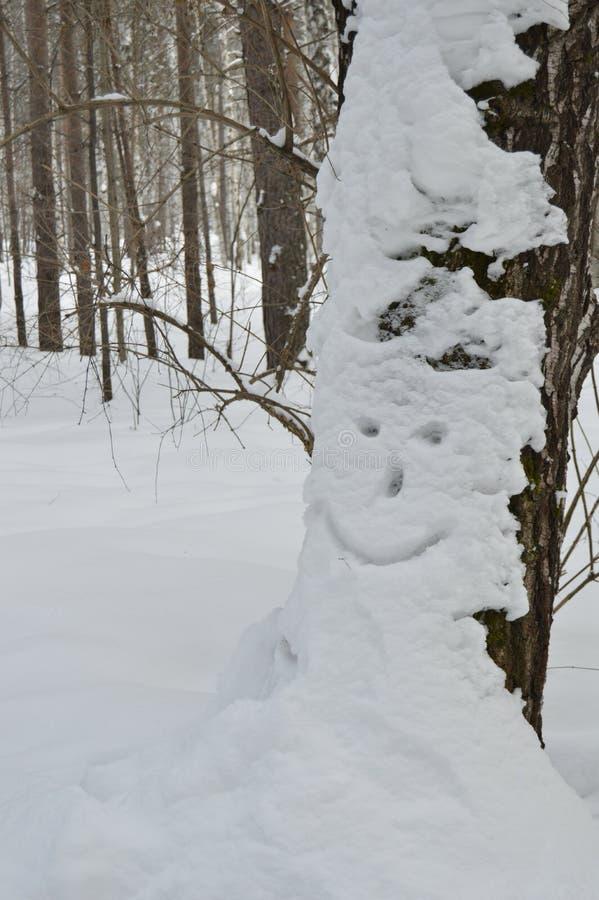 森林微笑 免版税库存照片