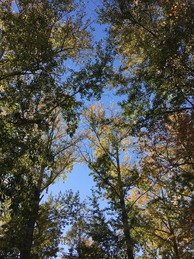 森林成为冥想 免版税库存图片