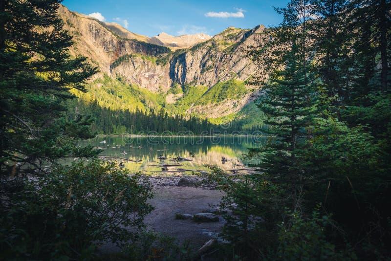 森林打开的导致湖 库存照片