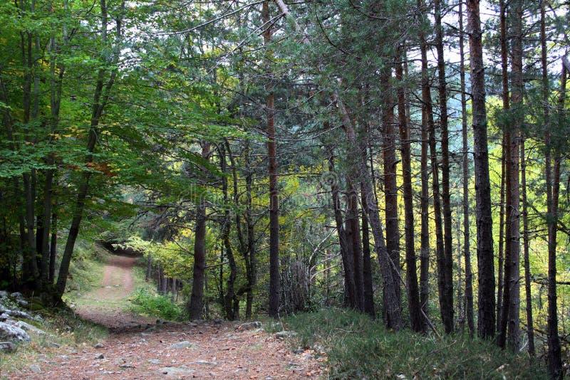 森林方式 免版税库存照片