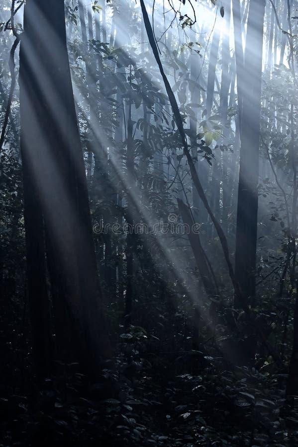 森林星期日 免版税库存图片