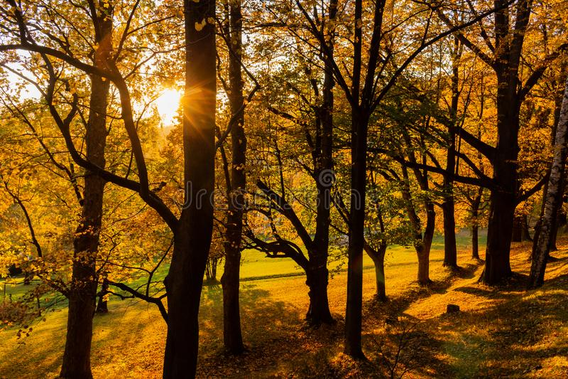森林春天风景-与草的林木在发光通过林木的前景和阳光 免版税库存照片