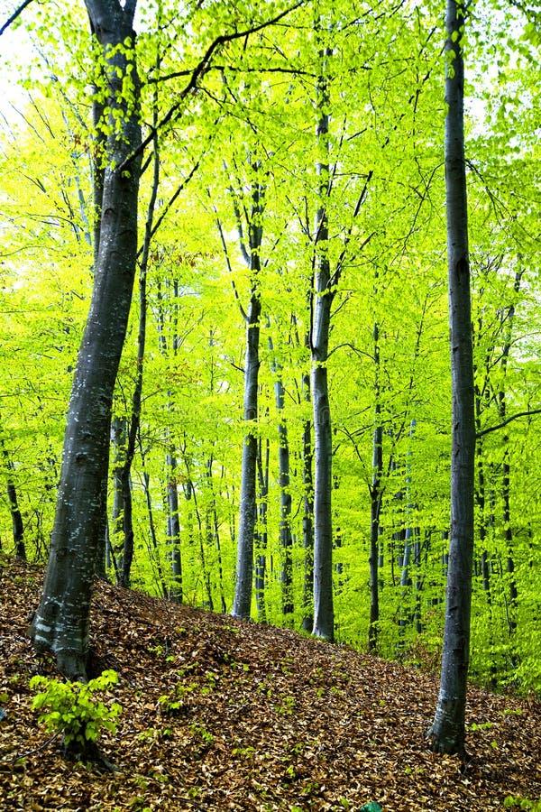 森林春天 免版税图库摄影
