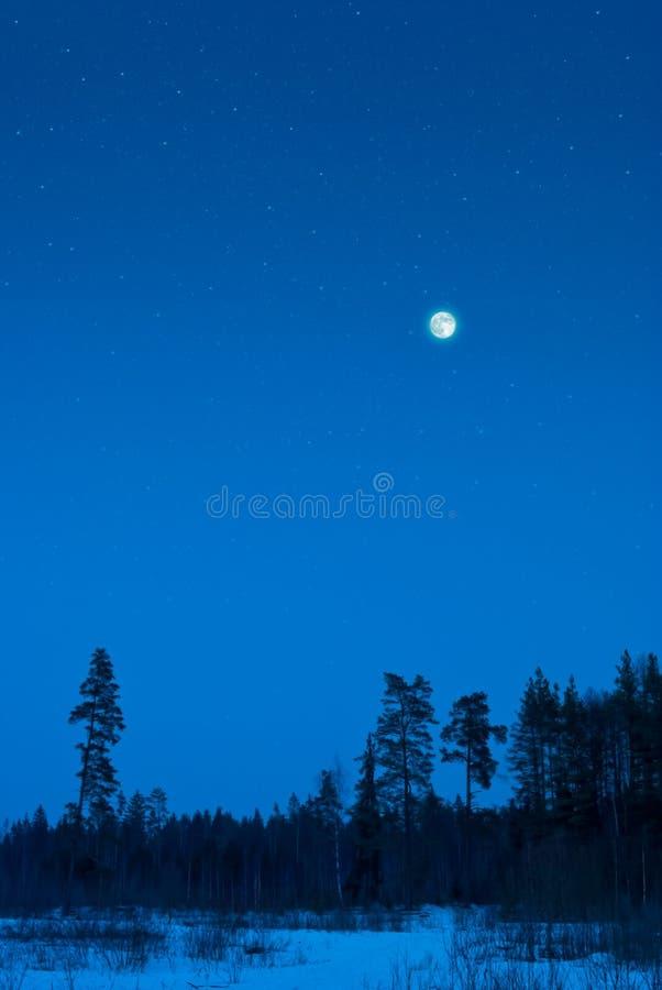 森林晚上冬天 库存图片