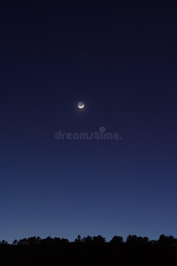 森林月光 库存照片
