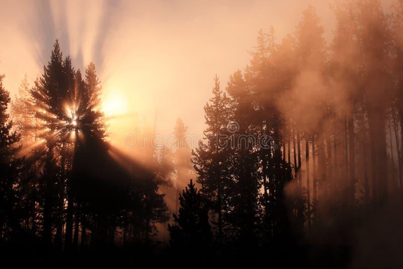 森林有薄雾的日出黄石 免版税库存照片