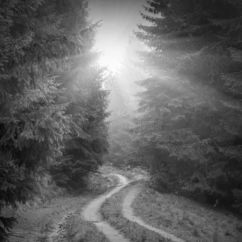 森林有薄雾的路 黑色白色 库存照片