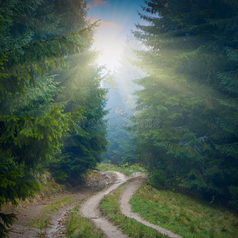 森林有薄雾的路 免版税图库摄影