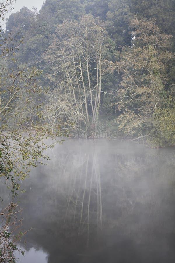 森林有雾的河在黎明 图库摄影