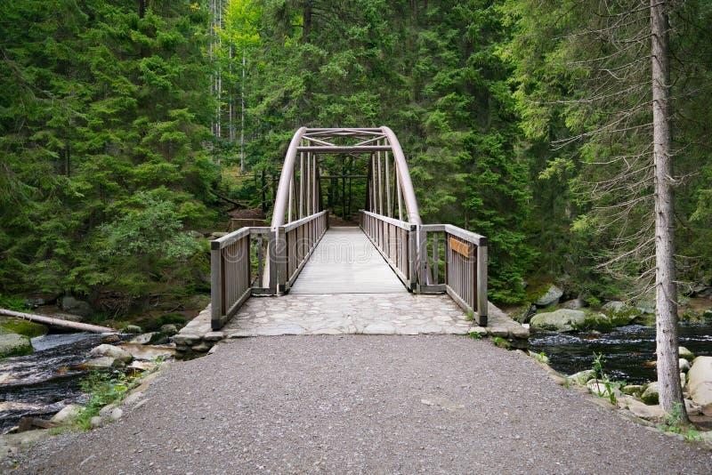 森林木桥说胡话的人横穿杉木云杉 库存图片