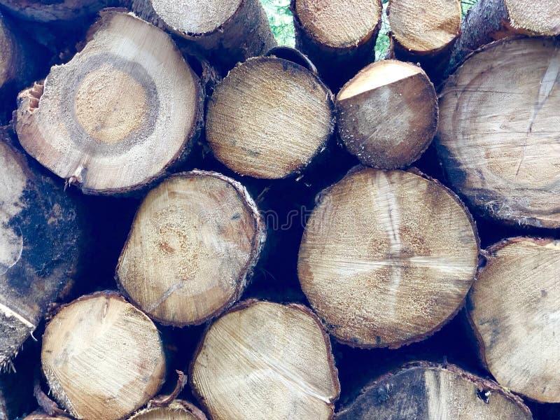森林木裁减 免版税库存照片