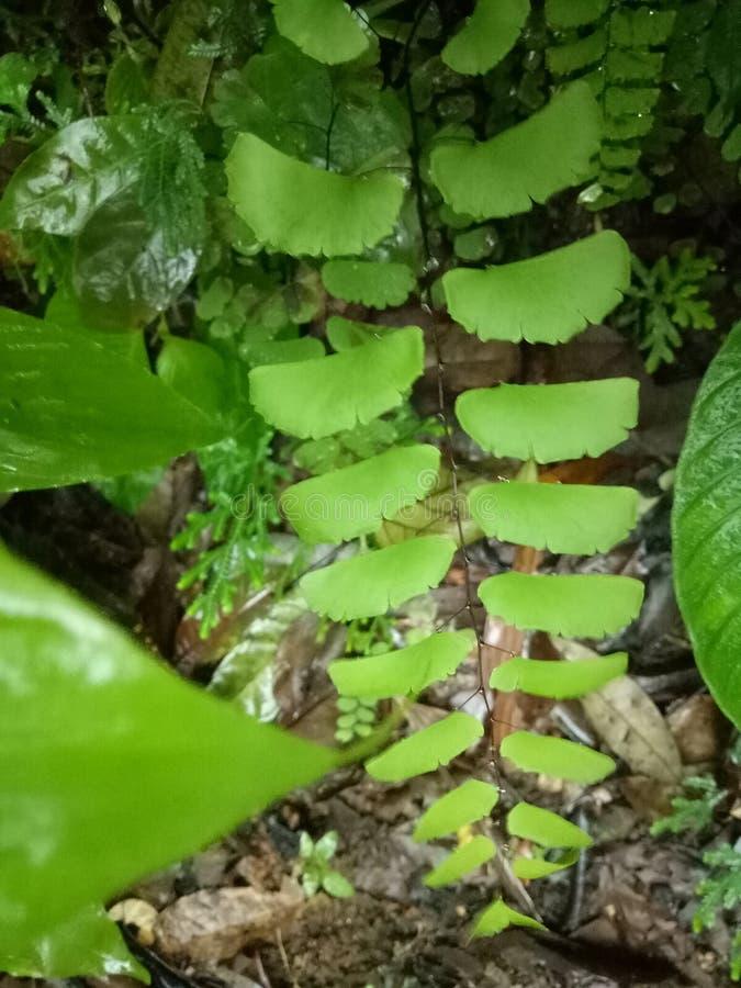 森林本质路结构树 库存图片