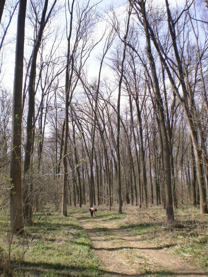 森林本质上 免版税库存照片