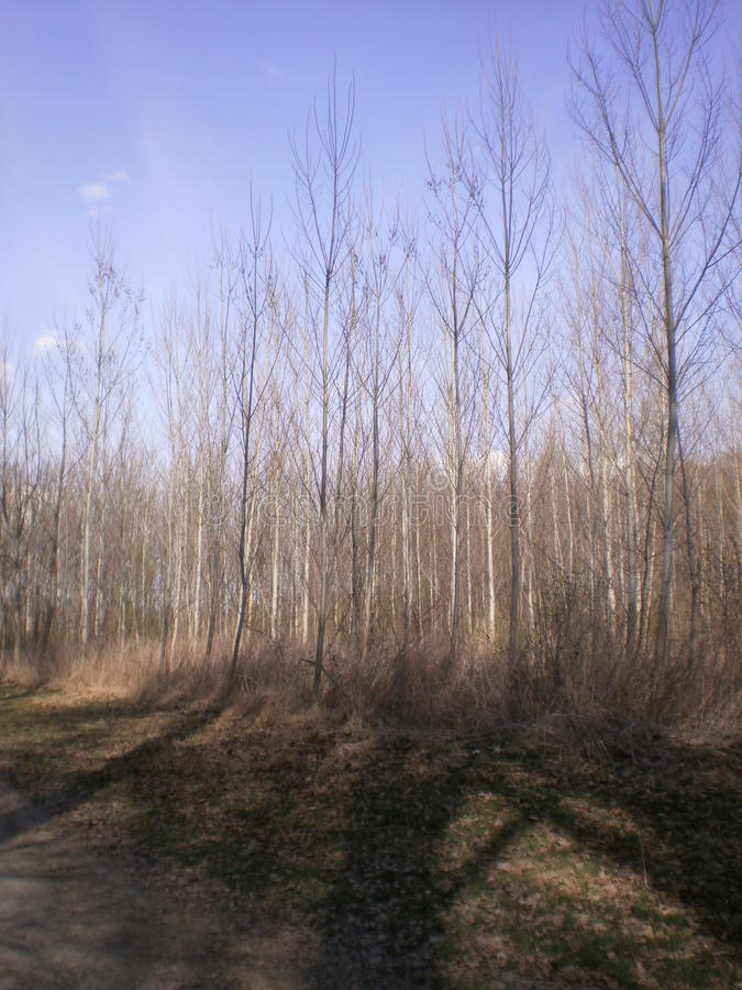 森林本质上 免版税图库摄影