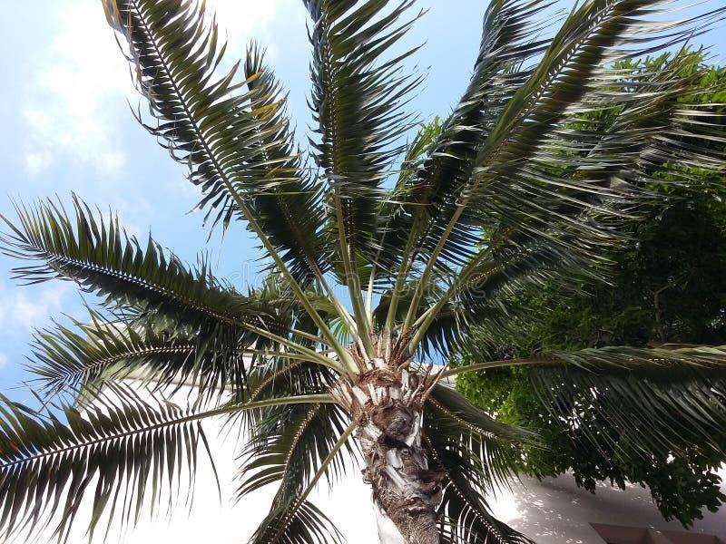森林本质路结构树 免版税库存图片