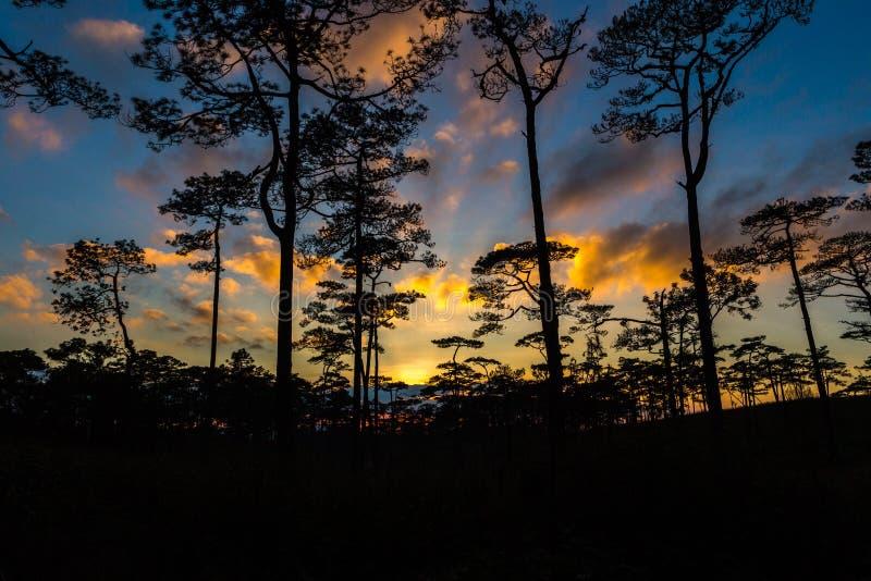 森林杉木日落 免版税库存照片