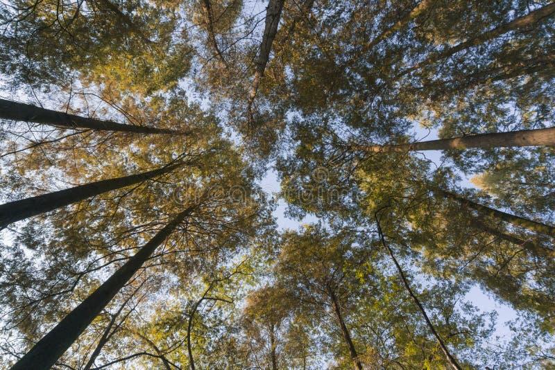 森林杭州西湖 免版税库存照片