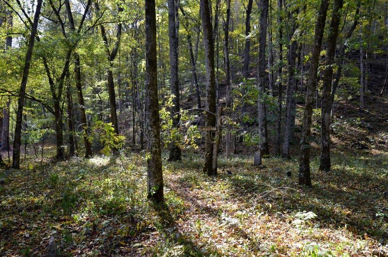 森林树阴影设置、立场和森林地板 库存照片