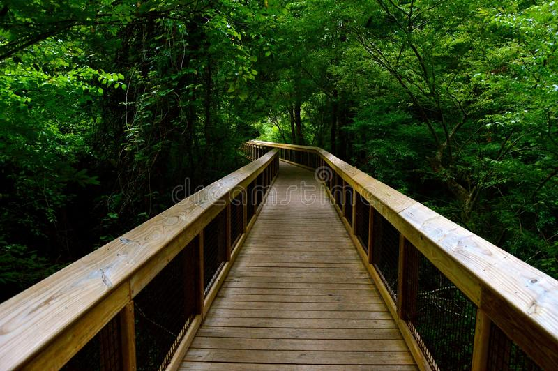森林桥梁路 免版税库存图片