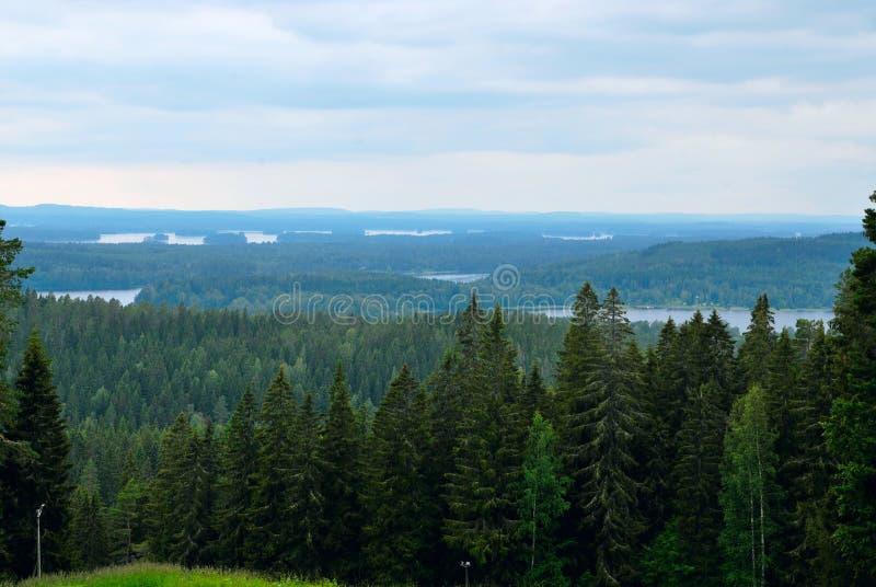 森林横向。 库存照片