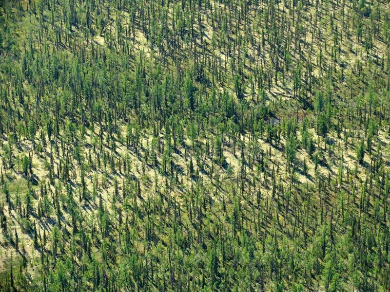 森林横向寒带草原 免版税库存图片