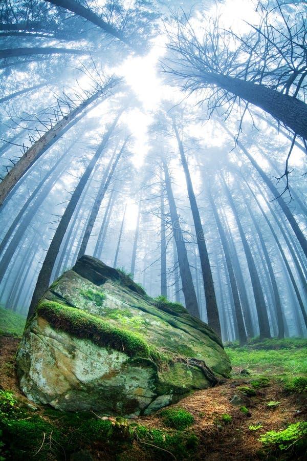 森林横向 免版税库存照片